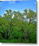 Beautiful Texas View 2 Metal Print