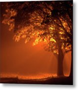 Beautiful Trees At Night With Orange Light Metal Print