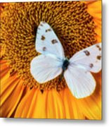 Beautiful White Butterfly On Sunflower Metal Print