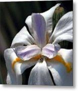 Beautiful White Day Lily Metal Print