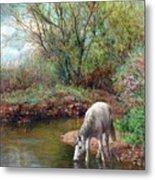 Beautiful White Horse And Enchanting Spring Metal Print