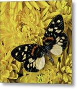 Beautiful Wings On Yellow Mums Metal Print