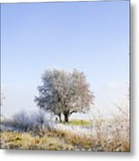 Beautiful Winter Background With Snow Tipped Trees Metal Print