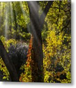 Beautiful Woodlands Metal Print