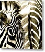 Beautiful Zebras Metal Print