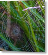 Beauty And Intricacy Metal Print