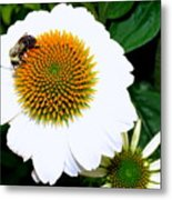 Beauty And The Bee #2 Metal Print