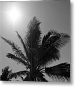 Beauty And The Palms In  Dominican Republic  Metal Print