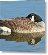 Beauty At Rest Metal Print
