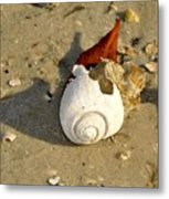 Beauty From The Sea Metal Print