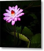 Beauty From The Shadows Metal Print