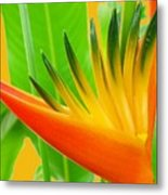 Beauty From The Sun Metal Print