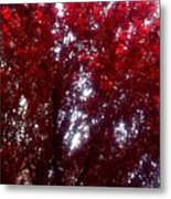Beauty-full Red  Metal Print