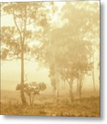 Beauty In A Forest Fog Metal Print