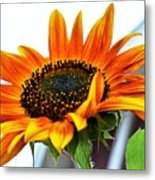 Beauty In A Sunflower Metal Print