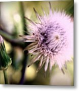 Beauty In Everything Metal Print