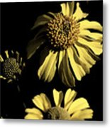 Beauty In The Darkness Metal Print