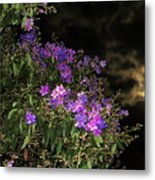 Beauty In The Night Time Metal Print