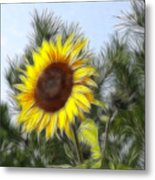 Beauty In The Pines Metal Print