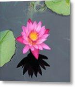 Beauty In Water Metal Print