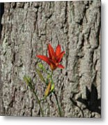 Beauty Is In The Details Metal Print