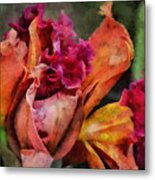 Beauty Of An Orchid Metal Print
