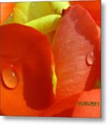 Beauty Of The Roses Metal Print
