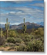 Beauty Of The Sonoran  Metal Print