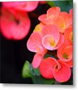 Beauty And Thorns Metal Print