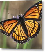 Beauty With Wings Metal Print