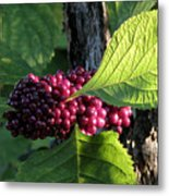 Beautyberry 2 Metal Print