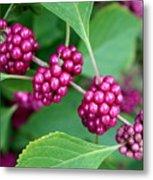 Beautyberry Bush Metal Print