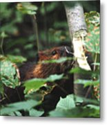 Beaver And Poplar Tree Metal Print