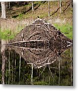 Beaver Lodge Reflection Metal Print