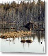 Beaver Residence Metal Print