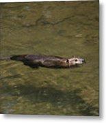 Beaver Swim Metal Print