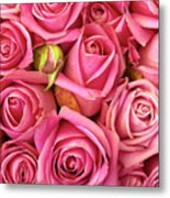 Bed Of Roses Metal Print by Carlos Caetano