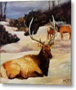 Bedded Down   Bull Elk In Snow Metal Print