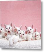 Bedtime Kittens I'm Not Tired Mom Metal Print