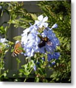 Bee And Butterfly II Metal Print