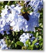 Bee And Flowers Iv Metal Print