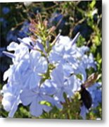 Bee And Flowers V Metal Print