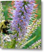 Bee And Its Lavender Delight Metal Print
