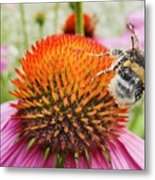 Bee And Pink Flower Metal Print