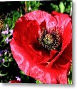 Bee And Red Poppy Metal Print