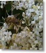 Bee And Small White Blossoms 2 Metal Print