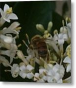 Bee And Small White Blossoms Metal Print