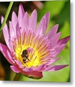 Bee And The Lily Metal Print