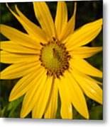Bee And Yellow Flower Metal Print