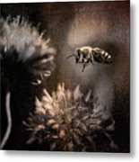 Bee Approaching Red Clover Blossom Metal Print